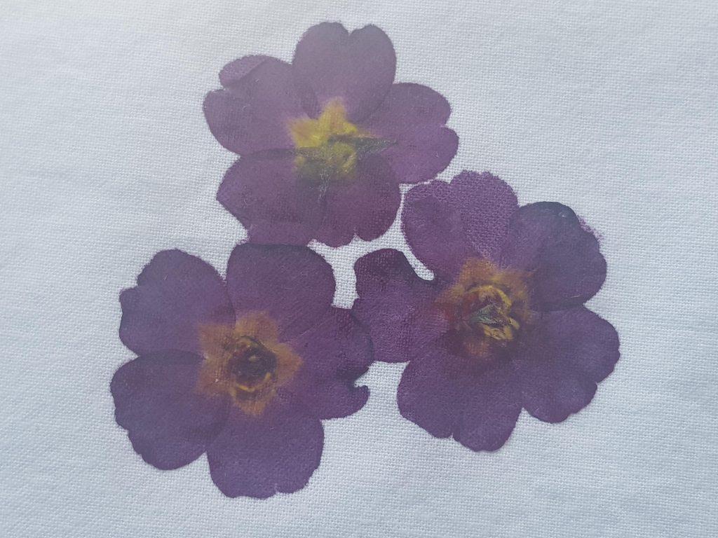 Tase flowers 3